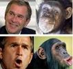 bush monkey